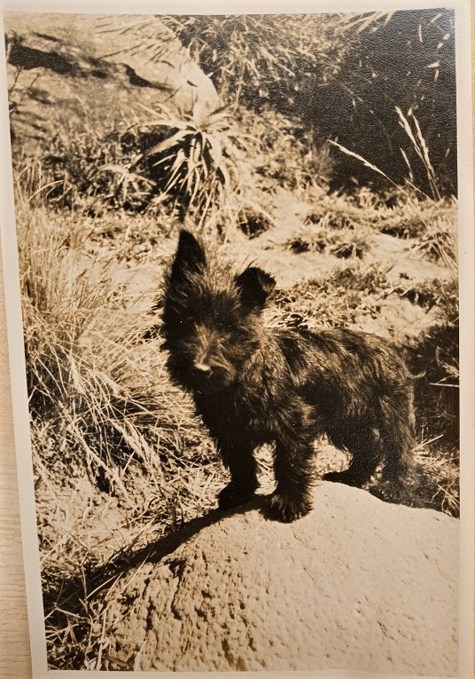 Haggis the dog, Papers of the Earls of Clarendon (2nd creation), c. 1932