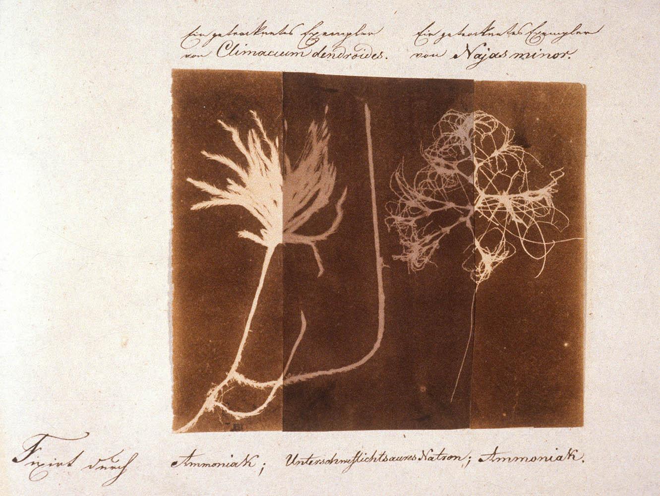 JuliusFritzsche-may1839-russia