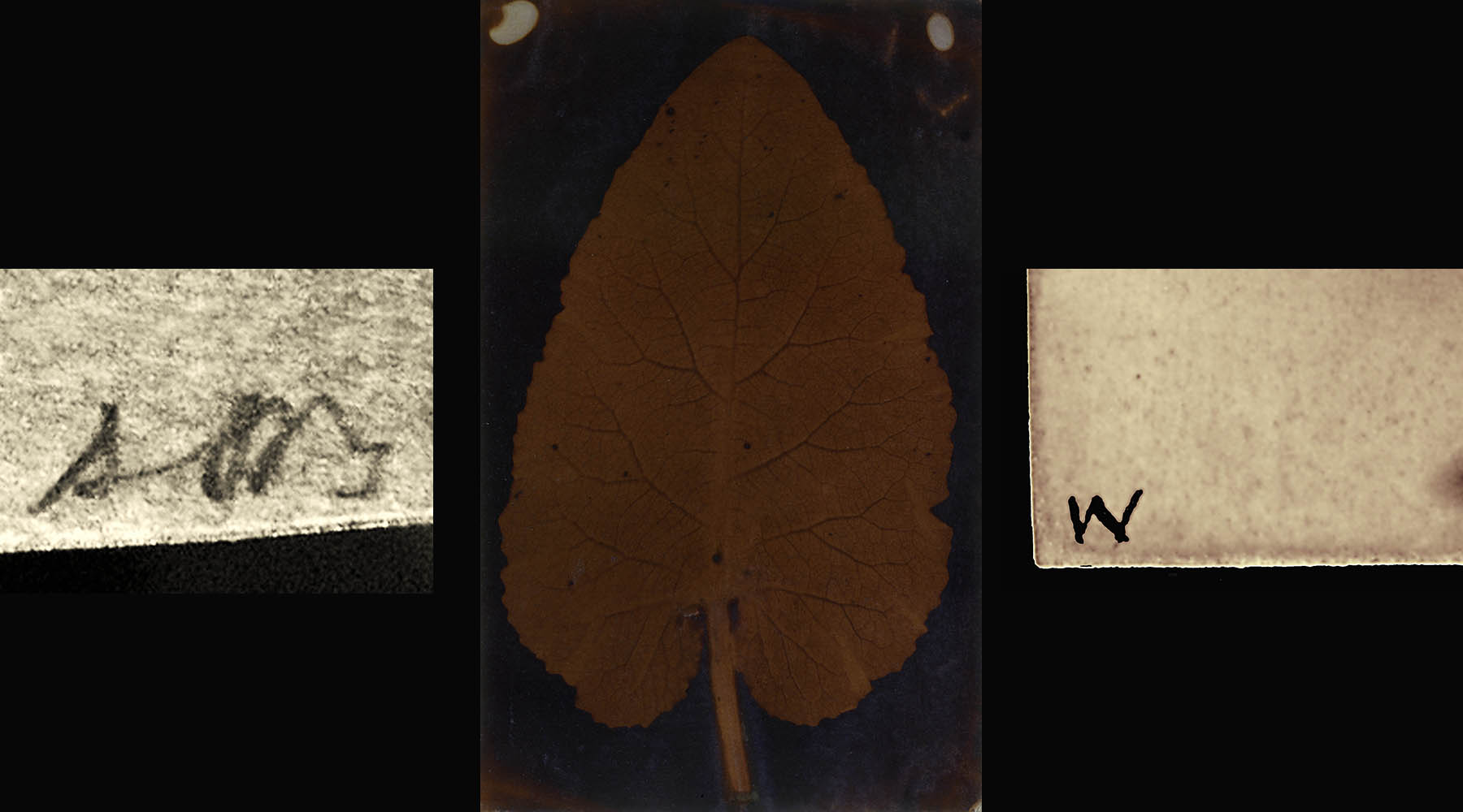 leaf-inscriptions