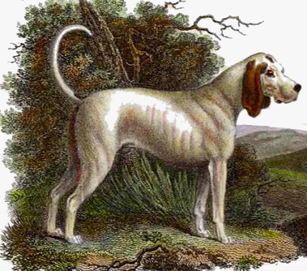 talbot-extinct-hunting-dog
