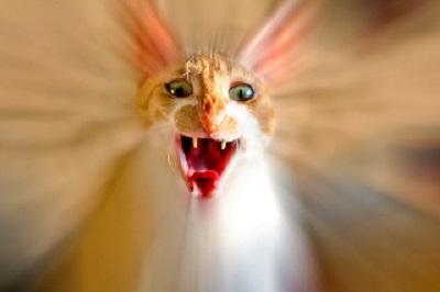Panicking Cat