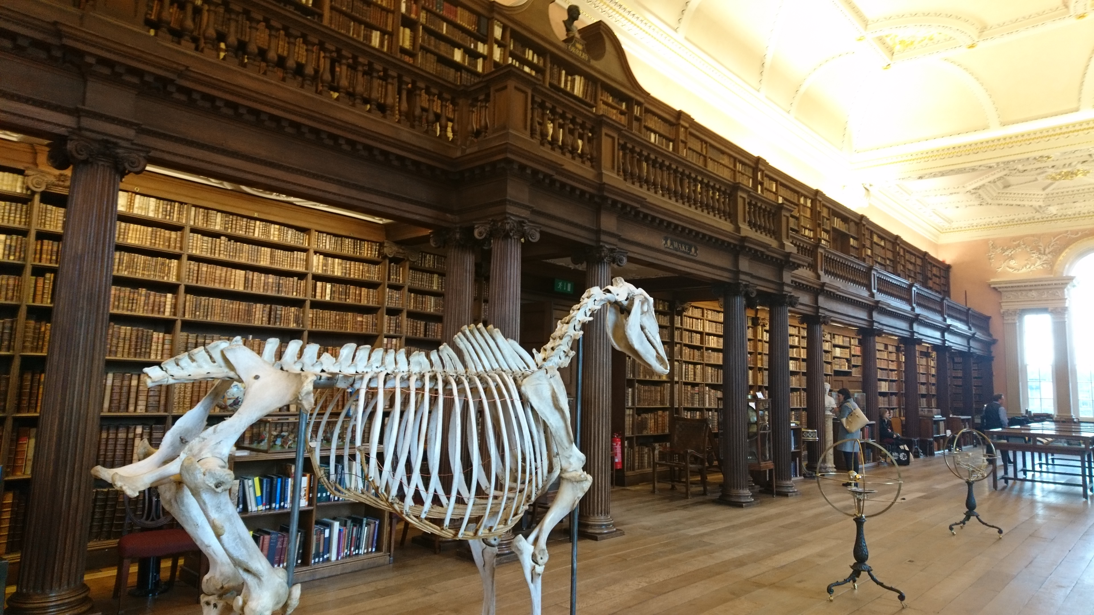 An image of Christ Church College's Upper Library, replete with a full horse skeleton.