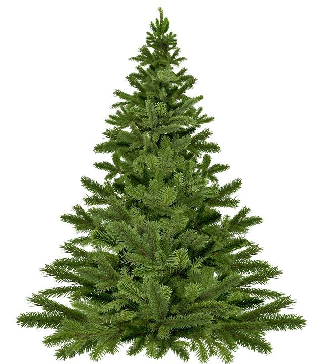 christmas-tree-1792267_960_720