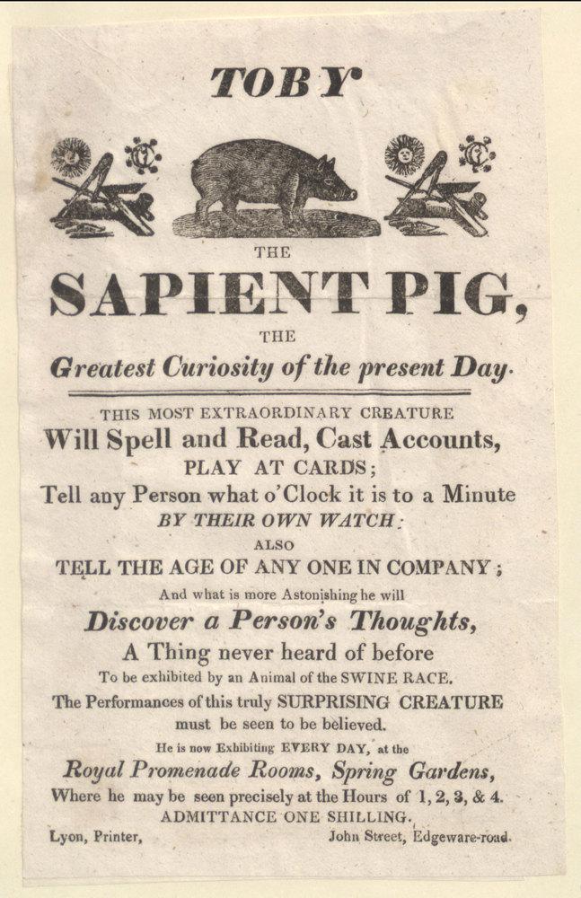 Toby the sapient pig