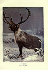 Image of reindeer from Biodiversity Heritage Library's Photostream on Flickr