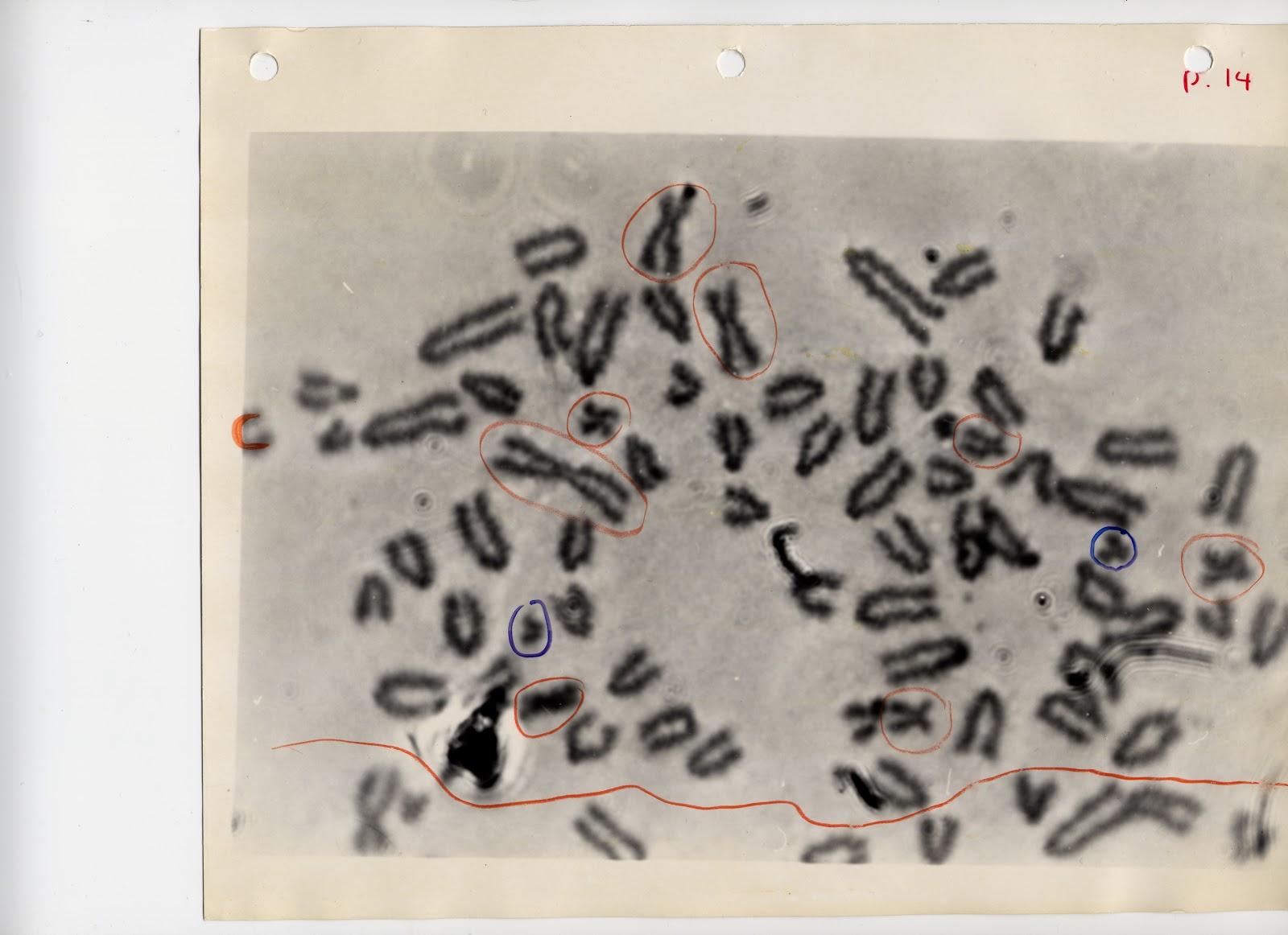 1_chromosome-3