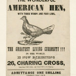 The Wonderful American Hen